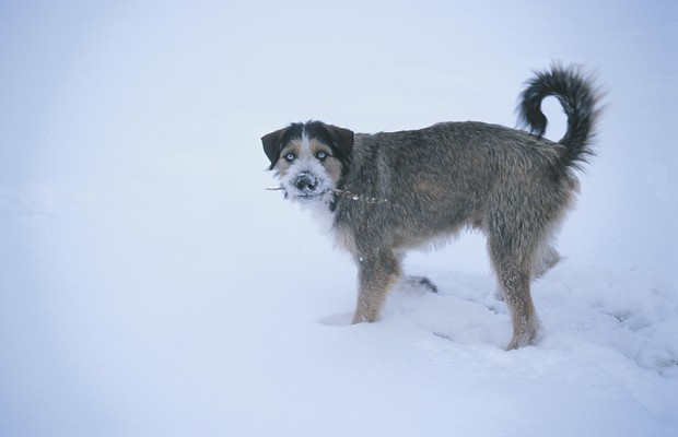 PM Bellingham 11/27/13 – Tips to keep pets safe in cold