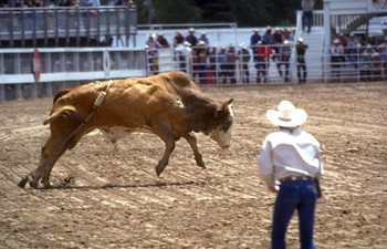 Professional Bull Riders Competition