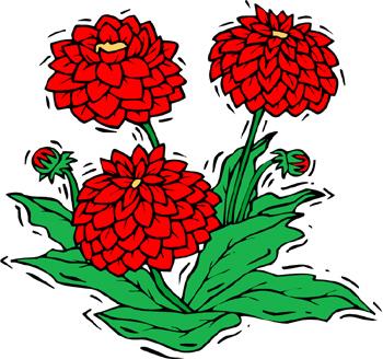Dahlia Flower Show