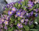 Springtime spring flowers